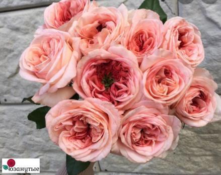 Роза Лондон ай / London Eye (чайно-гибридные)