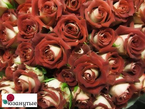 Роза Тирамису / Tiramisu (спреи)